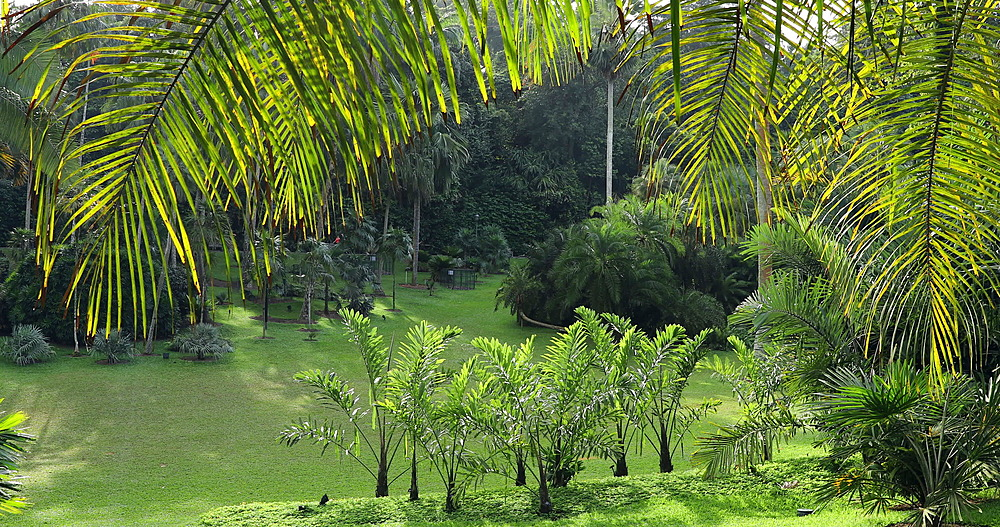 Palm Valley in Botanic Gardens, Singapore, Southeast Asia, Asia - 800-3056