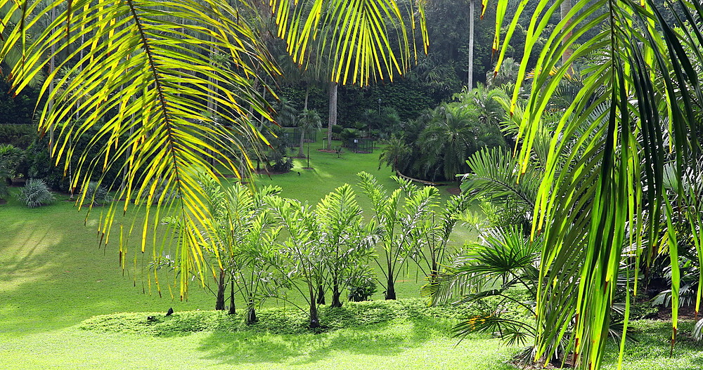 Palm Valley in Botanic Gardens, Singapore, Southeast Asia, Asia
