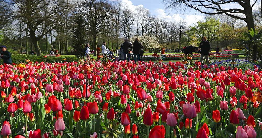 Tourists at Keukenhof Gardens, Lisse, Netherlands - 800-3145