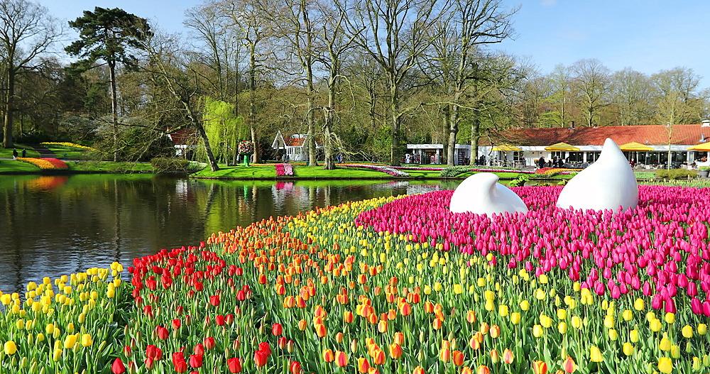 Tulips at Keukenhof Gardens, Lisse, Netherlands - 800-3153