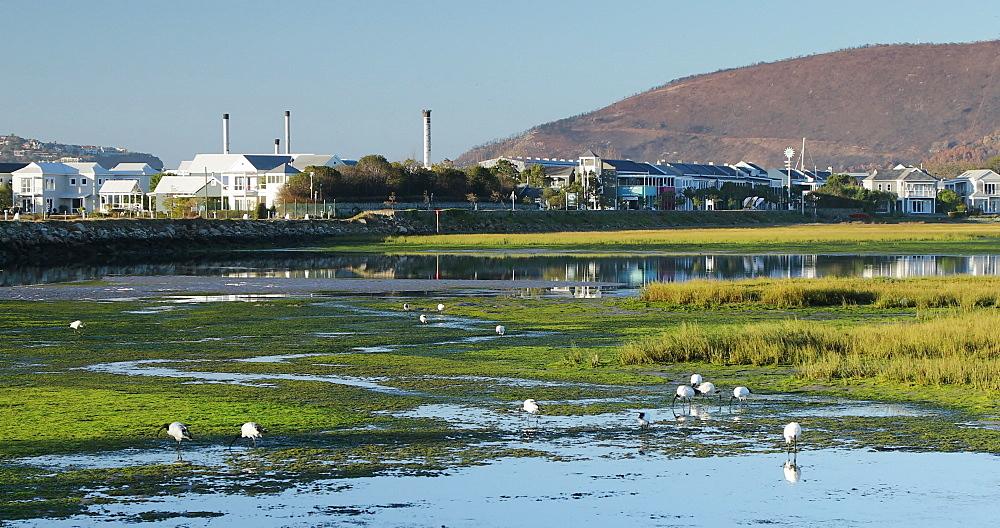 Houses along Knysna River, Knysna, Western Cape, South Africa - 800-3328