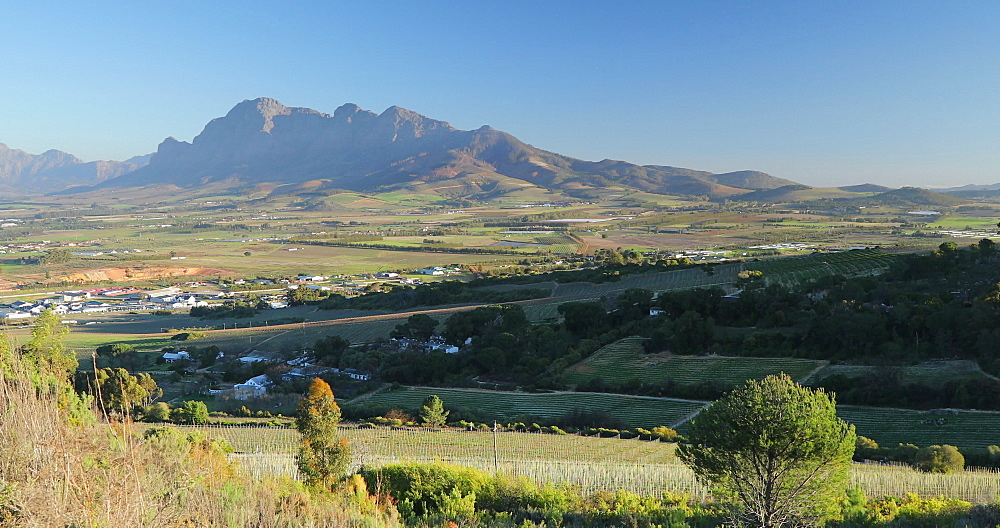 View of Paarl Valley, Western Cape, South Africa, Africa - 800-3346