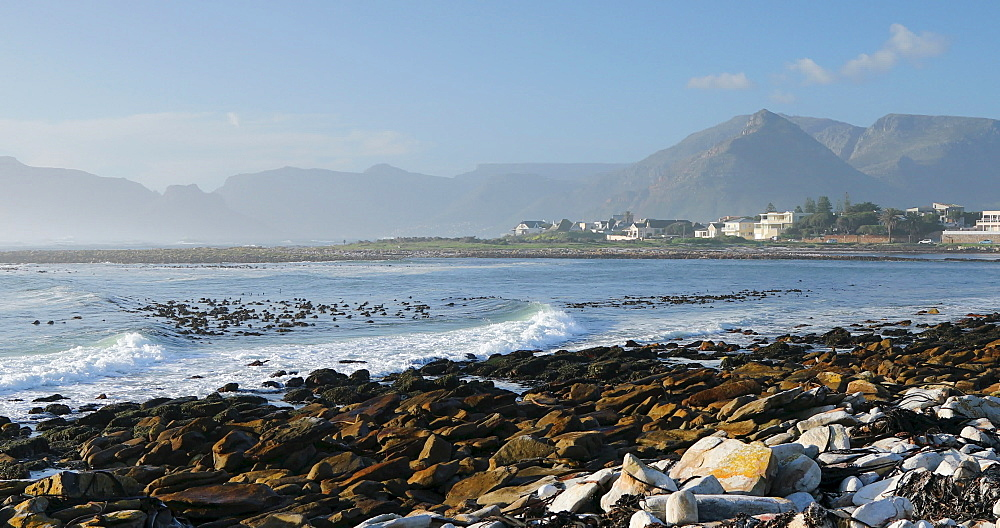 Kommetjie beach, Cape Town, Western Cape, South Africa, Africa - 800-3374