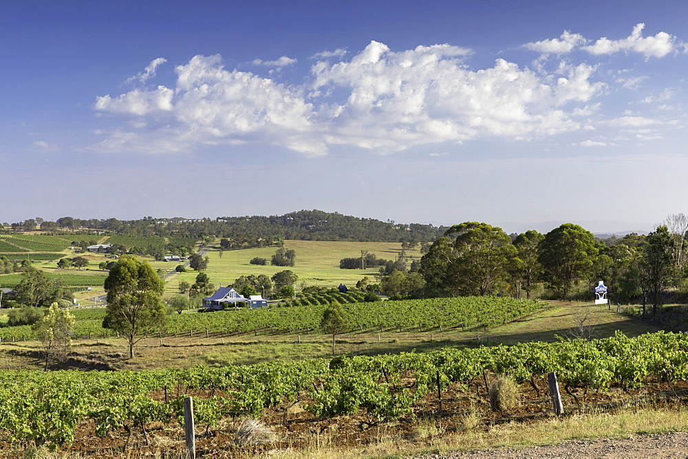 Ivanhoe Wine Estate, Hunter Valley, New South Wales, Australia