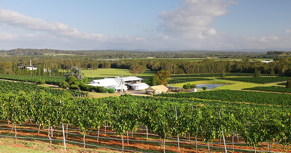 Lake's Folly Vineyard, Hunter Valley, Cessnock, New South Wales, Australia, Pacific - 800-3504