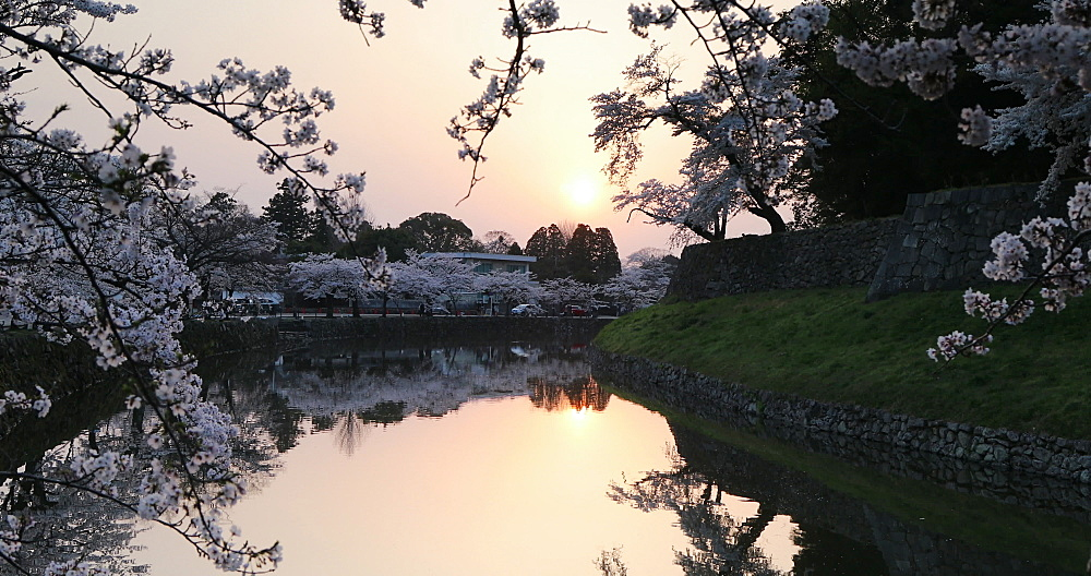 Cherry blossom and moat of Hikone Castle, Hikone, Kansai, Japan, Asia - 800-3539