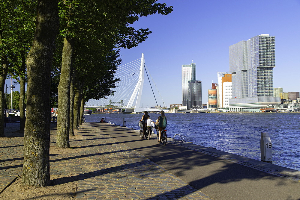 People cycling along Nieuwe Maas River, Rotterdam, Zuid Holland, Netherlands, Europe