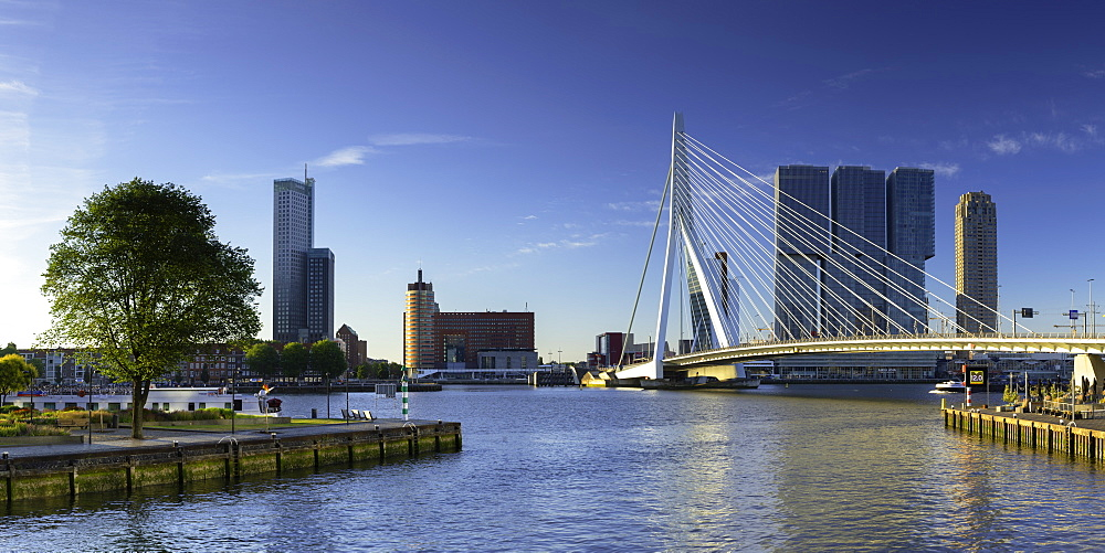 Erasmus Bridge (Erasmusbrug) and skyline, Rotterdam, Zuid Holland, Netherlands - 800-3548