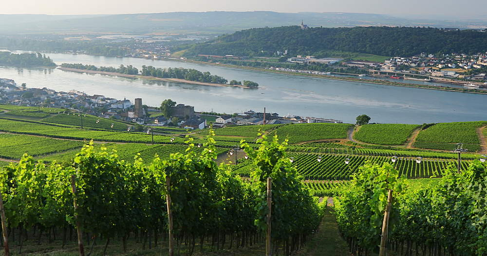 View of vineyards and River Rhine, Rudesheim, Rhineland-Palatinate, Germany - 800-3612