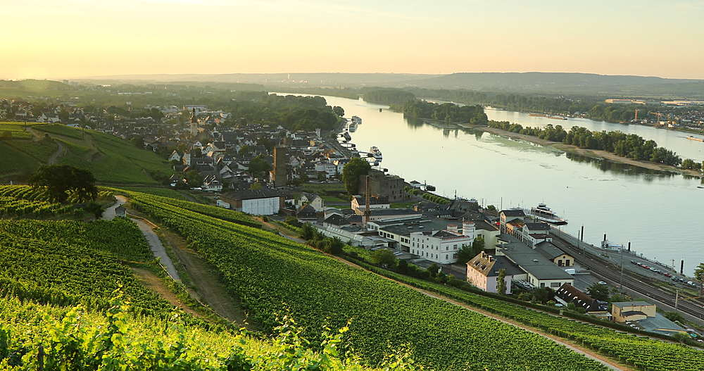 View of vineyards and River Rhine at sunrise, Rudesheim, Rhineland-Palatinate, Germany - 800-3616