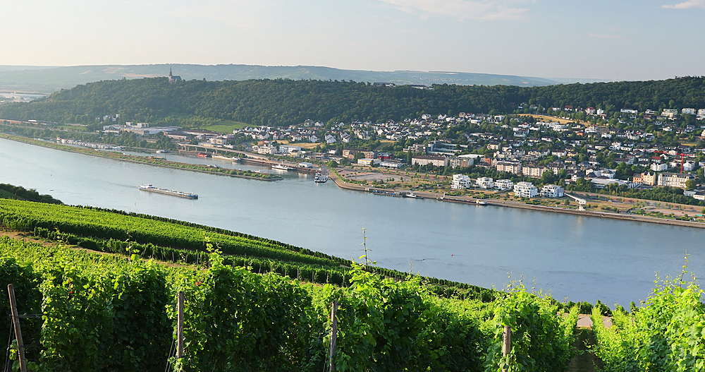View of vineyards and River Rhine at sunrise, Rudesheim, Rhineland-Palatinate, Germany - 800-3617