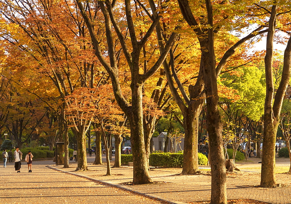 Autumn colours in Shirakawa Park, Nagoya, Honshu, Japan, Asia