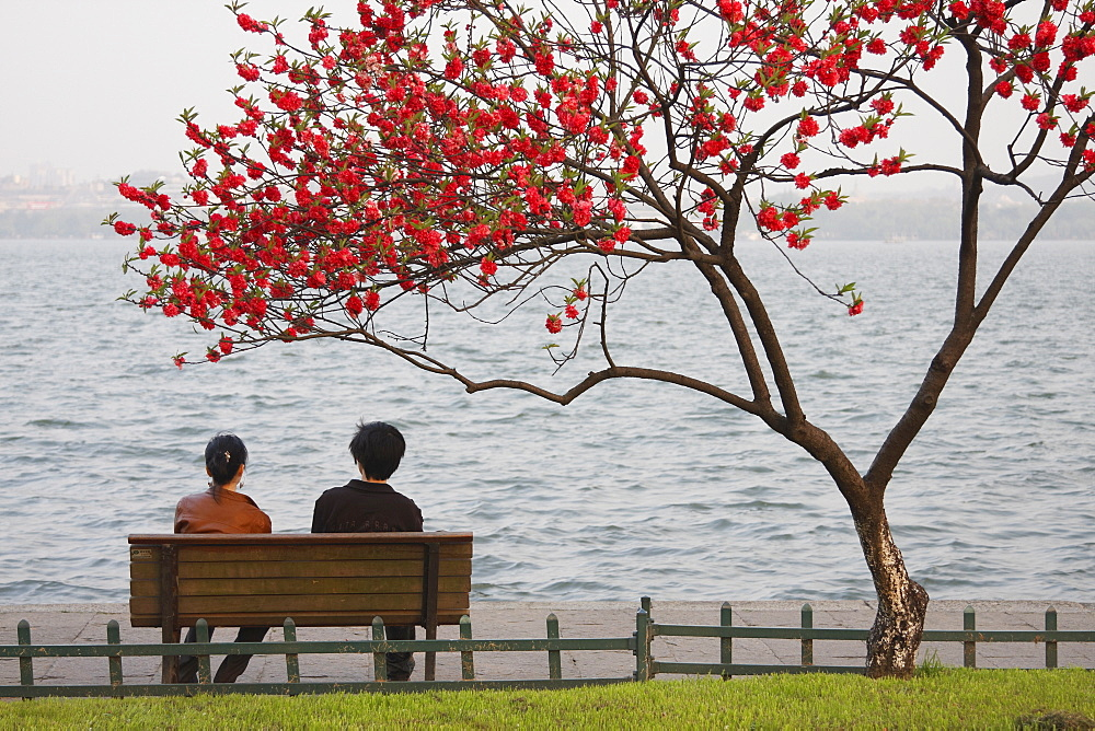 Chinese couple sitting under tree in blossom along Xi Hu (West Lake) at dusk, Hangzhou, Zhejiang, China, Asia