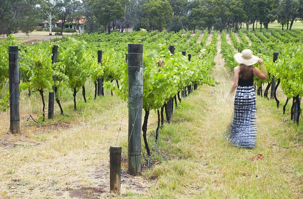 Woman walking through vines at Sandalford Winery, Swan Valley, Perth, Western Australia, Australia, Pacific