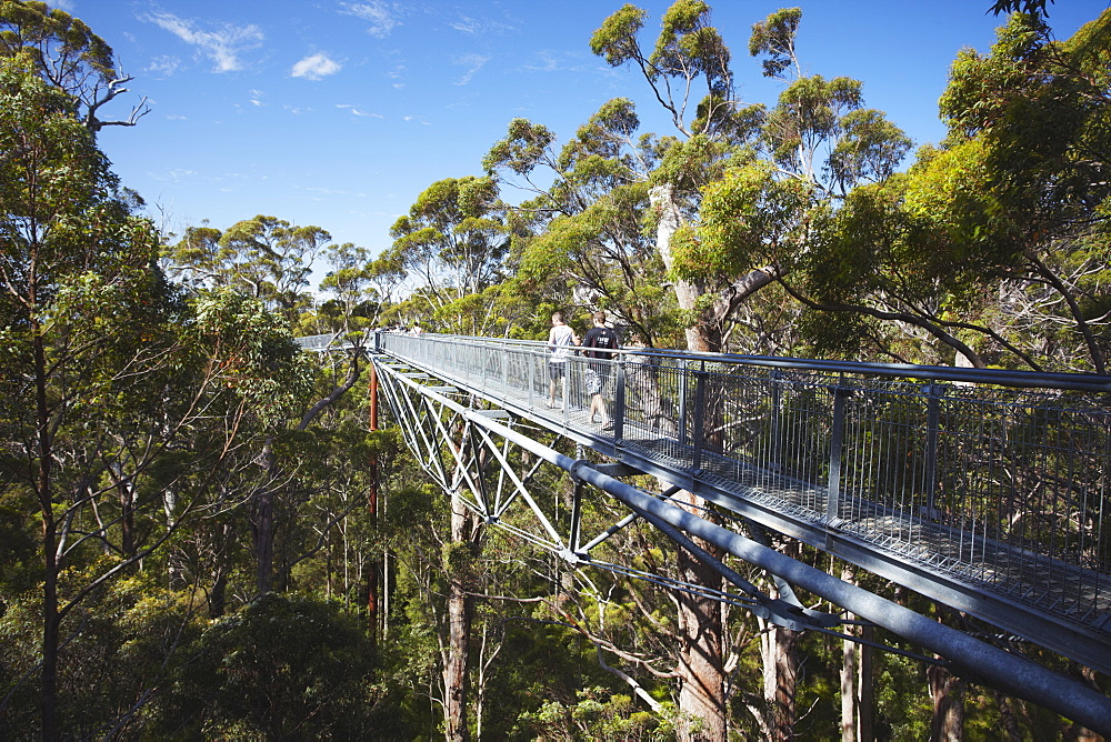 Treetop Walk in Valley of the Giants, Walpole, Western Australia, Australia, Pacific