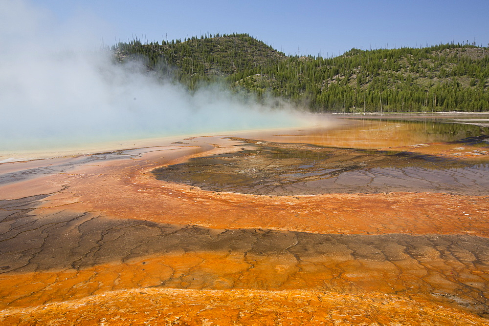 Pool runoff of orange bacteria and algae (Therophiles), Grand Prismatic Pool, Midway Geyser Basin, Yellowstone National Park, UNESCO World Heritage Site, Wyoming, United States of America, North America