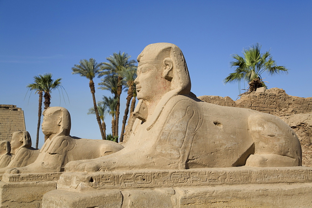Avenue of Sphinxes, Luxor Temple, Luxor, Thebes, UNESCO World Heritage Site, Egypt, North Africa, Africa