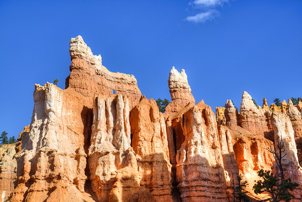 Hoodoos, on the Queens Garden Trail, Bryce Canyon National Park, Utah, United States of America, North America
