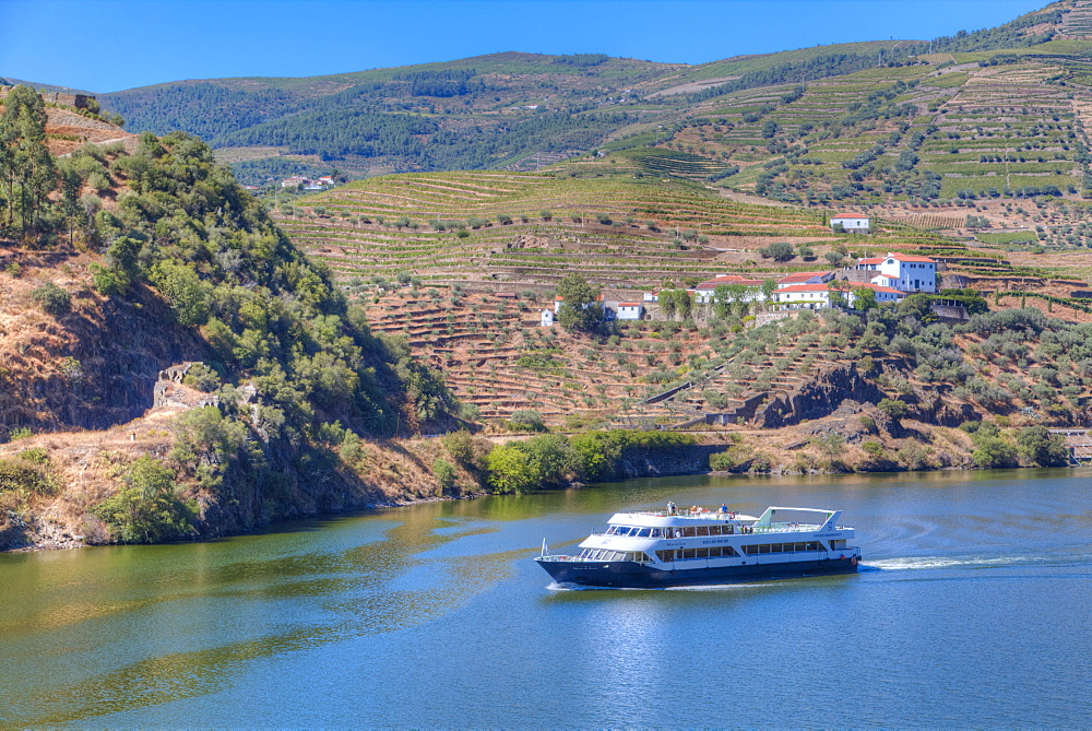 Tourist boat, vineyards and the Douro River, Alto Douro Wine Valley, UNESCO World Heritage Site, Portugal, Europe