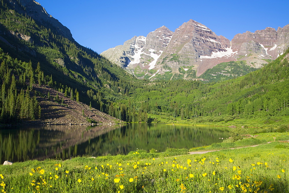 Alpine sunflowers (Hymennoxys grandiflora), Maroon Lake, Maroon Bells Peaks in background, Maroon Bells Scenic Area, Colorado, United States of America, North America