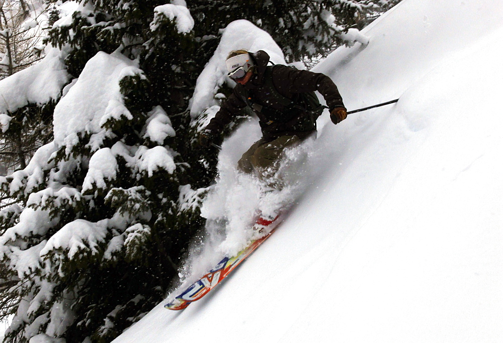 An off-piste skier in deep powder in the forests above Courmayeur and the east side of Mont Blanc, Aosta Valley, Italian Alps, northern Italy, Europe