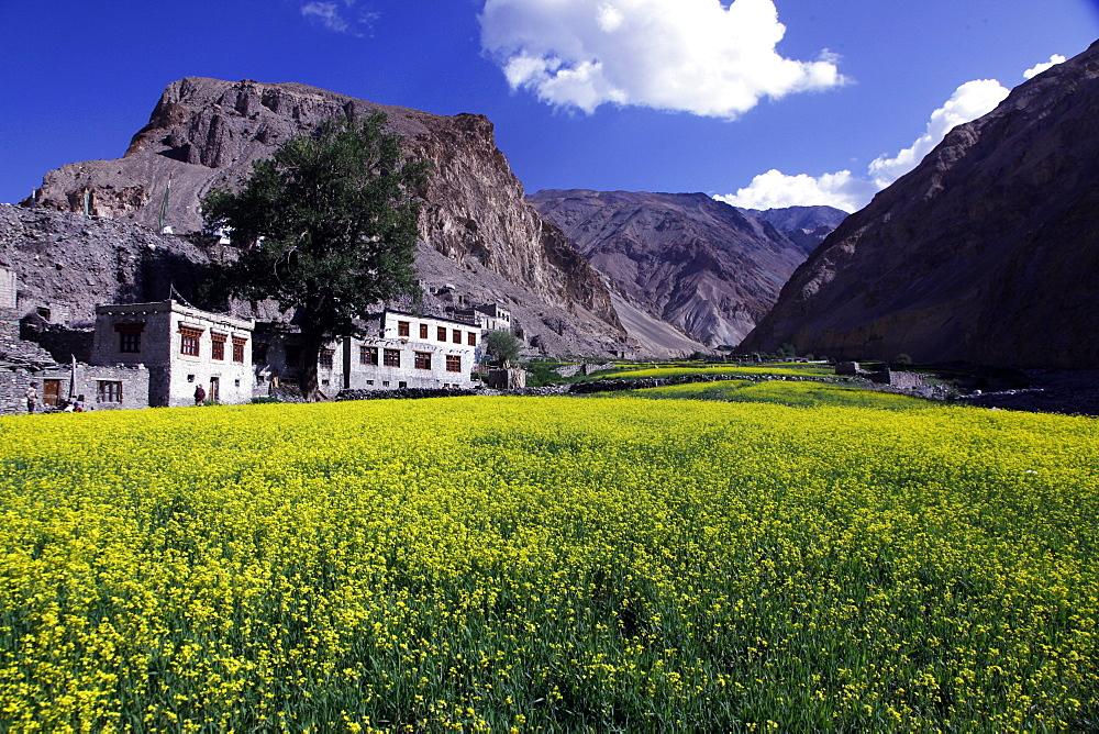 A mountain village in the Markha Valley, Zanskar, India, Asia - 802-357