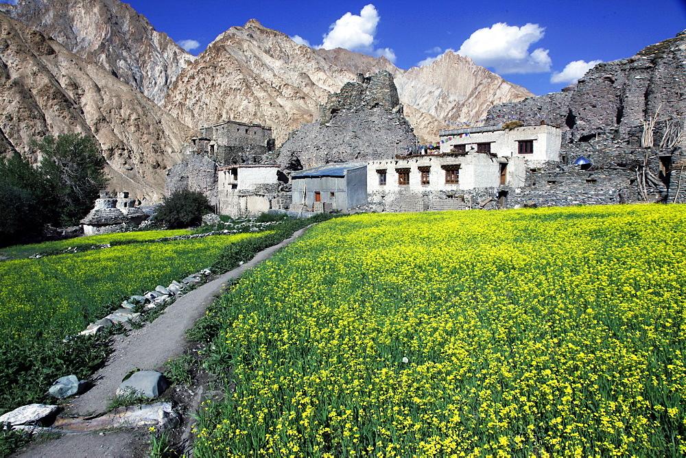 A mountain village in the Markha Valley, Zanskar, India, Asia - 802-361