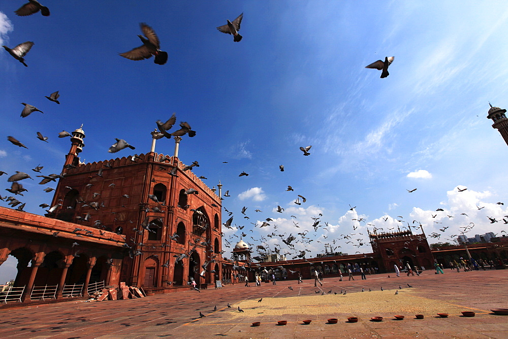 Pigeons feed on grain scattered on the paving stones in the courtyard of Jama Masjid (The Masjid-i Jah)