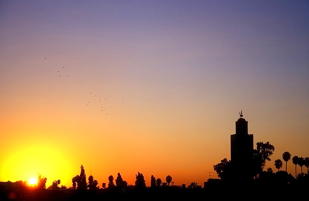A flock of birds flies over the skyline of Marrakech at sunset, Morocco, North Africa, Africa