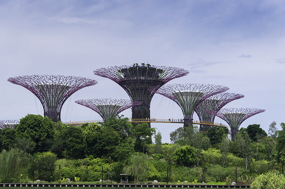 The Supertrees in the Garden By The Bay in Singapore, Southeast Asia, Asia - 803-223