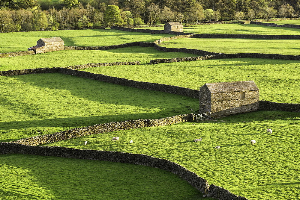Barns and dry stone walls at Gunnerside, Swaledale, Yorkshire Dales, Yorkshire, England, United Kingdom, Europe - 803-233