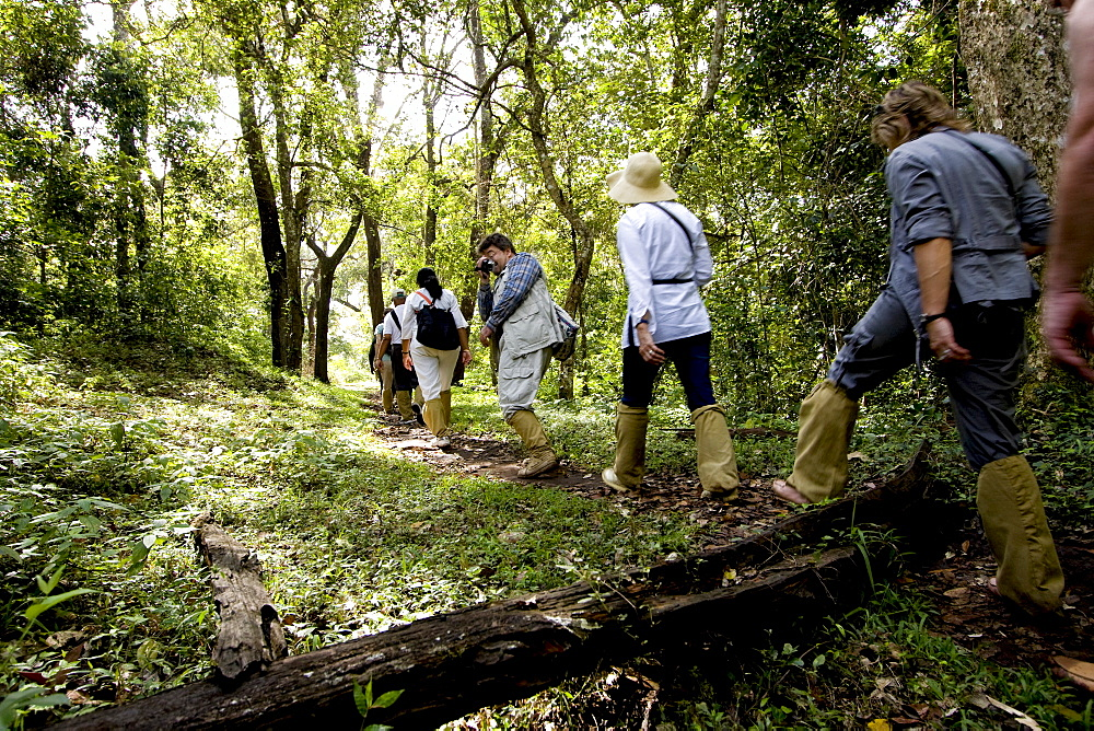 Trekking through the forest, Gavi, Thekkady, Kerala, India, Asia - 804-260