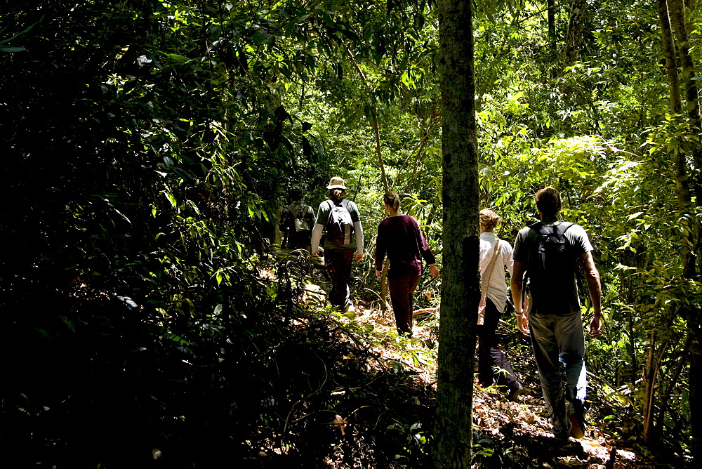 Trekking through the forest, Thekkady, Kerala, India, Asia - 804-331