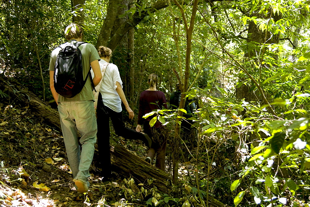 Trekking through the forest, Thekkady, Kerala, India, Asia - 804-332