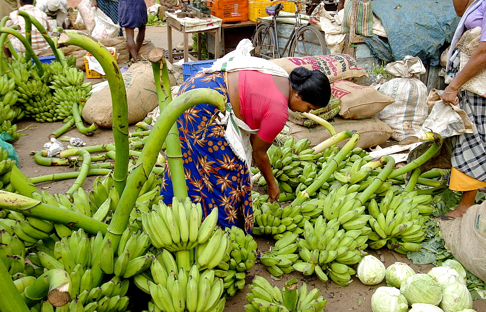 Vegetable market, Chalai, Trivandrum, Kerala, India, Asia - 804-349