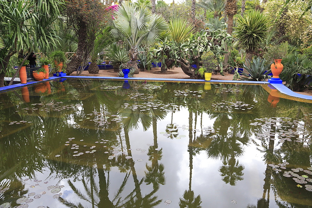 Jardin Majorelle (Majorelle Gardens), restored by fashion designer Yves Saint Laurent, Marrakesh (Marrakech), Morocco, North Africa, Africa - 807-1949