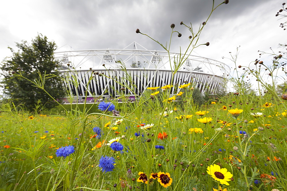 Olympic Stadium surrounded by wild flowers in the Olympic Park, Stratford City, London, England, United Kingdom, Europe