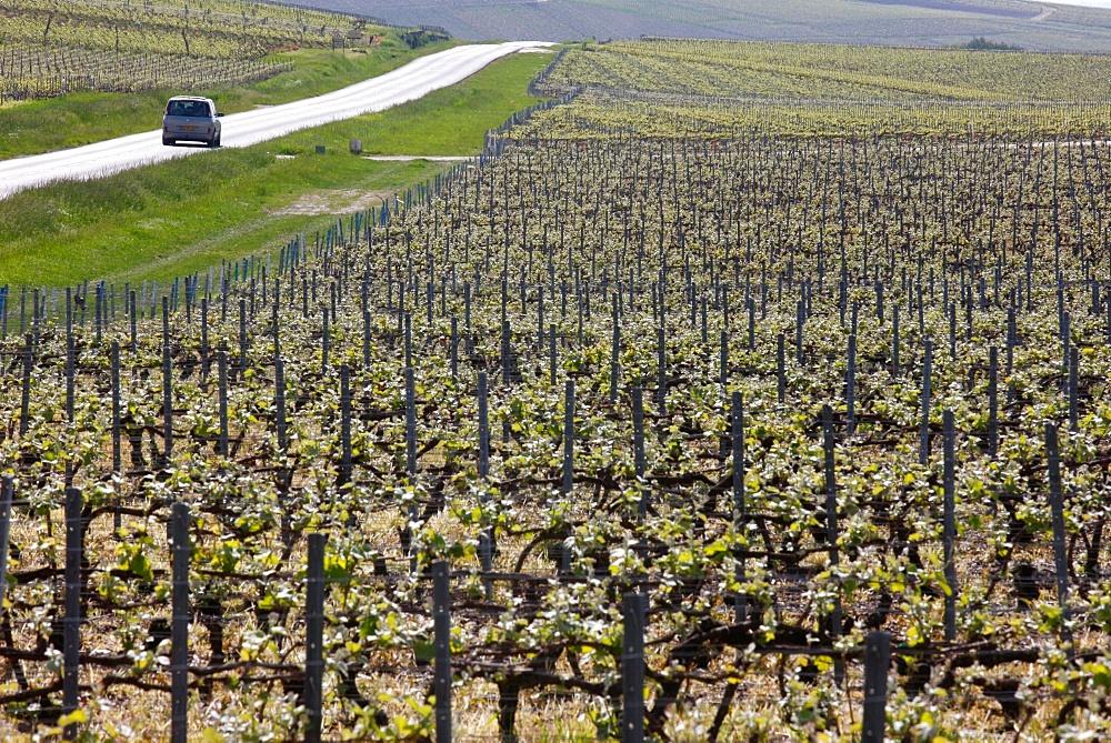 Champagne vineyard, Hautvilliers, Marne, France, Europe