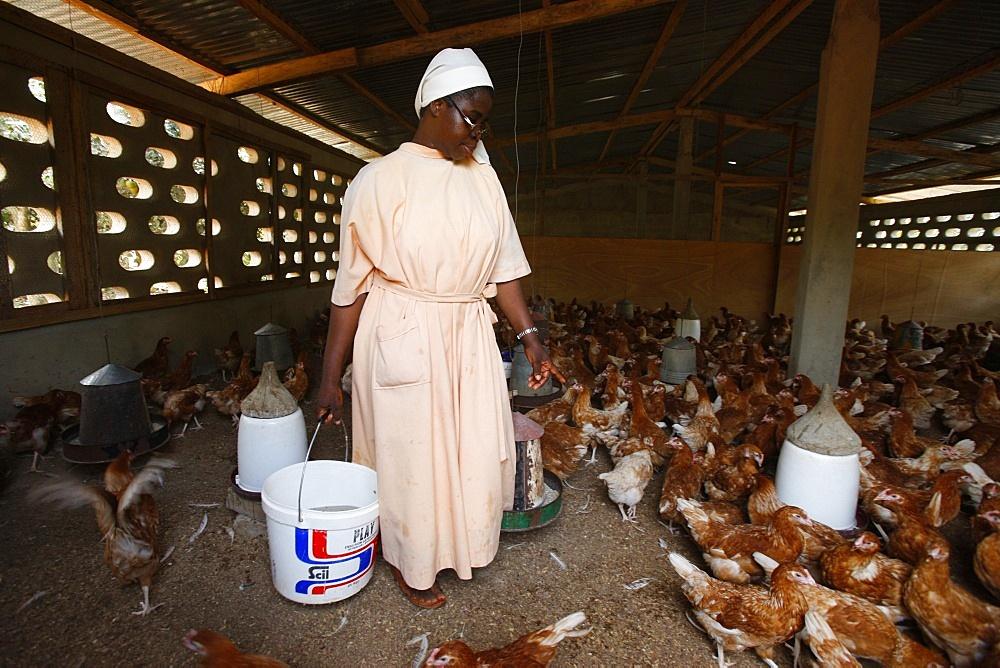 Poultry breeding at Akepe Catholic Monastery, Akepe, Togo, West Africa, Africa