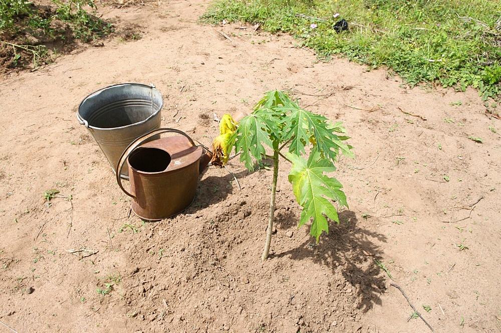 Vegetable garden, Tori, Benin, West Africa, Africa