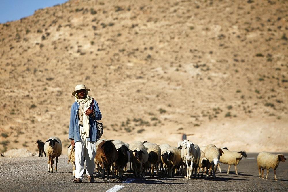 Shepherd driving a herd near Toujane village, Tunisia, North Africa, Africa