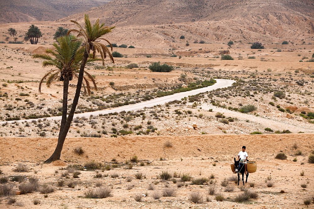 Boy on a donkey in a parched landscape, Gabes, Tunisia, North Africa, Africa