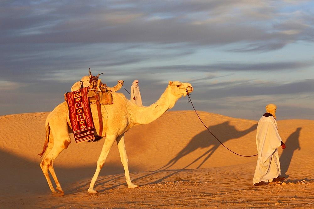 Camel driver in the Sahara, Douz, Kebili, Tunisia, North Africa, Africa