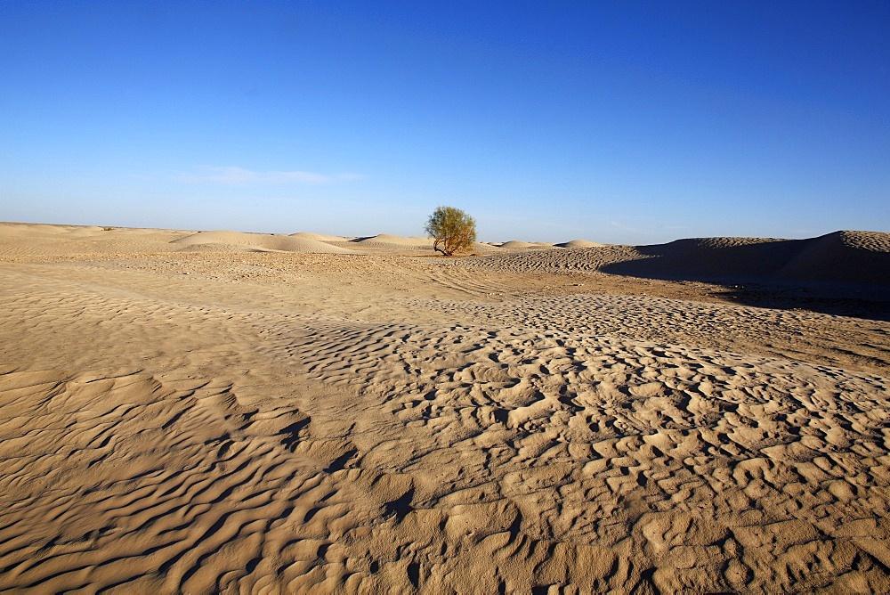 Sahara landscape, Douz, Kebili, Tunisia, North Africa, Africa