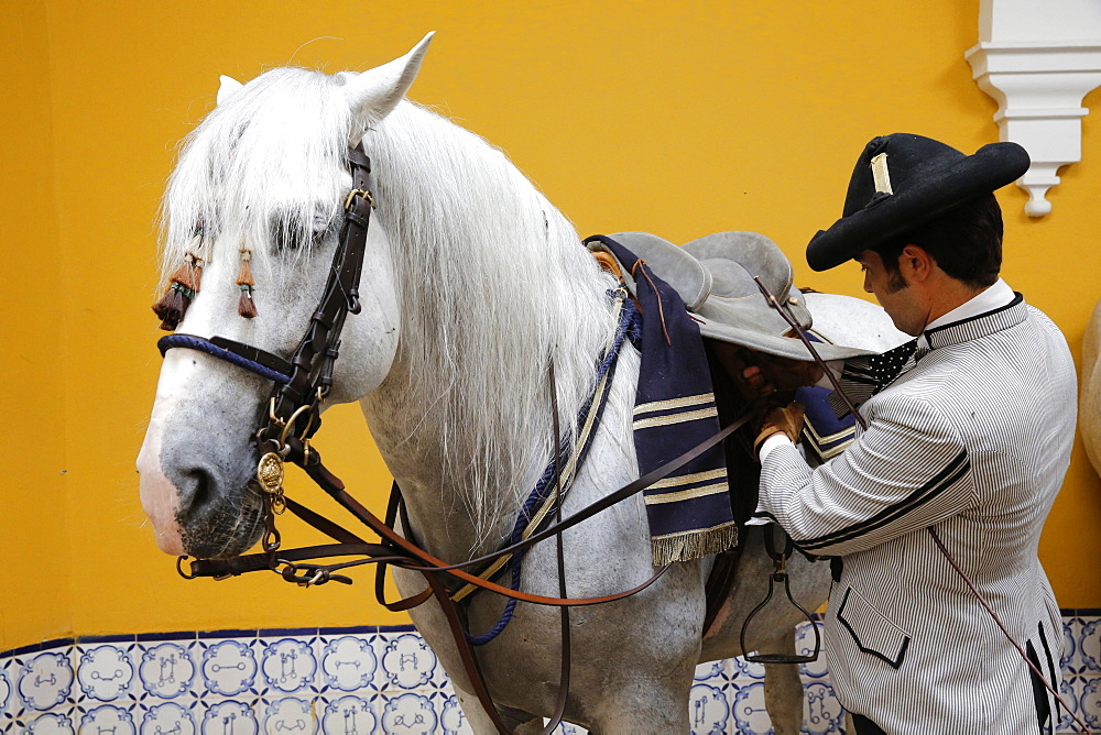 Preparing a horse to be ridden at the Royal Andalusian School of Equestrian Art, Jerez, Andalucia, Spain, Europe