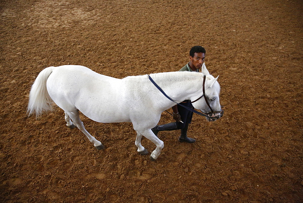 Man training a white horse at the Royal Andalusian School of Equestrian Art, Jerez, Andalucia, Spain, Europe