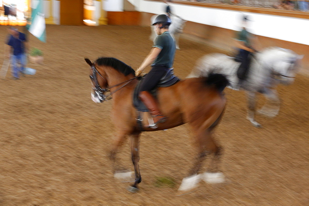 The Royal Andalusian School of Equestrian Art training, Jerez, Andalucia, Spain, Europe