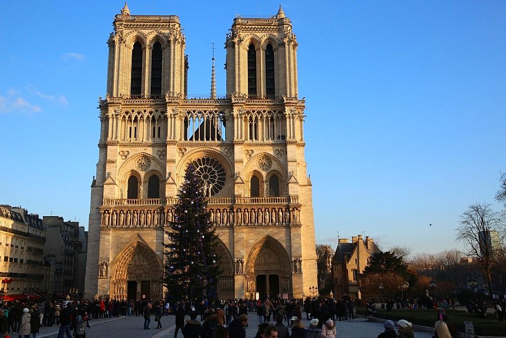 Tourists and Christmas tree outside Notre Dame de Paris Cathedral, Paris, France, Europe