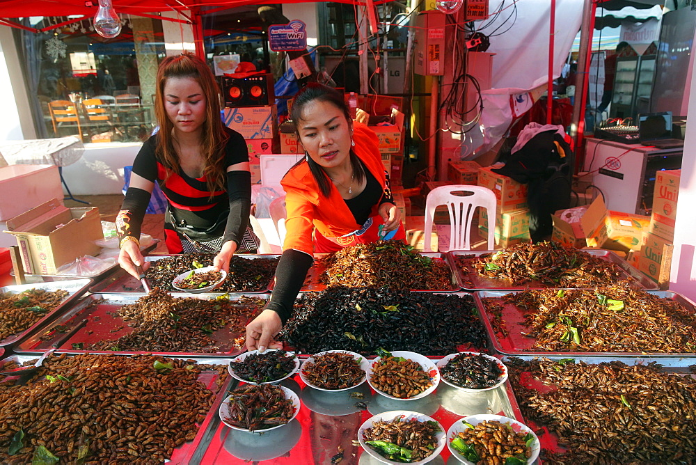 Display of fried insects, Food Market, Vientiane, Laos, Indochina, Southeast Asia, Asia - 809-6821