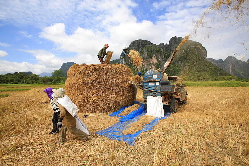 Agriculture. Rice field. Lao farmers harvesting rice in rural lanscape.